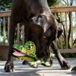 tuffy_alligator_04-731x1024
