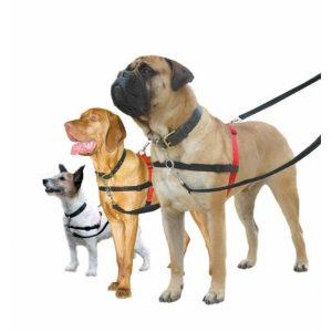 Harnais Halti  - PM : jack russel, terrier 30 à 60 cm 13,90 € - MM : labrador, border, staff 60 à 80 cm 16,90 € - GM : mastiff, rotweiller + de 80 cm 19,90 €