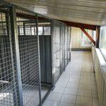 pension caniskol maure de Bretagne 3
